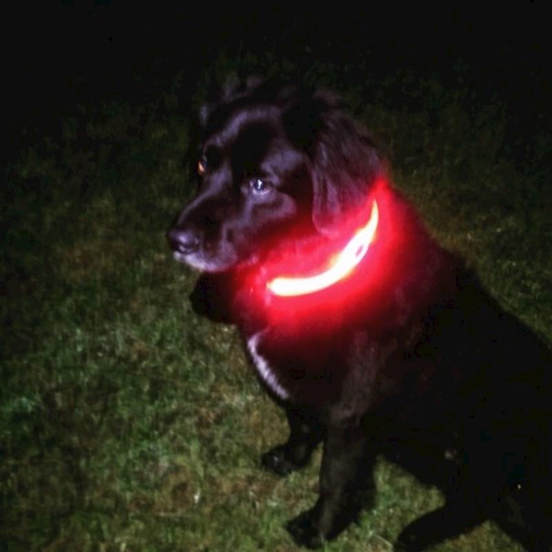 Visto PetSaber Dog Collar - green
