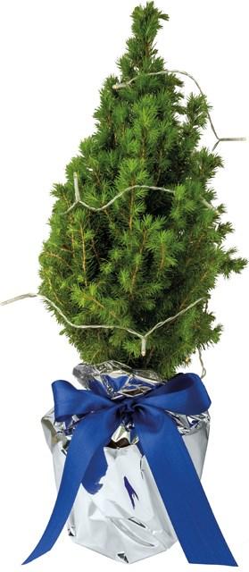 Echte Mini Kerstboom Inclusief Lampjes Als Relatiegeschenken